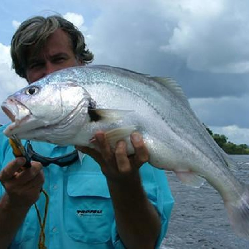 South American silver croaker