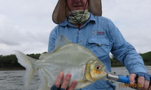 Imagem 7 de Piranha
