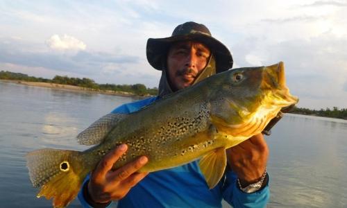 Imagem 12 de Peacock bass