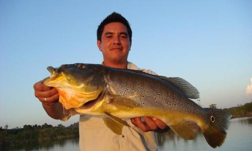 Imagem 65 de Peacock bass