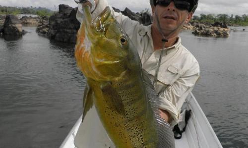 Imagem 9 de Peacock bass