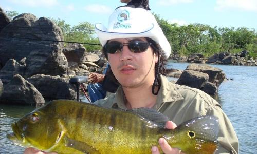 Imagem 67 de Peacock bass