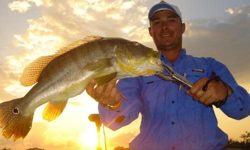 Imagem 4 de Peacock bass