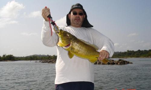 Imagem 11 de Peacock bass