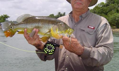 Imagem 2 de Peacock bass