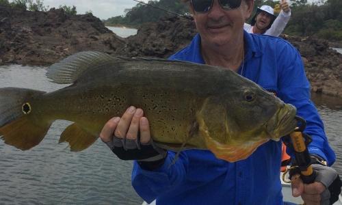 Imagem 18 de Peacock bass