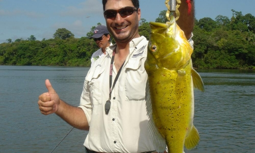 Imagem 29 de Peacock bass