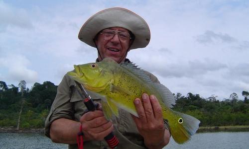 Imagem 32 de Peacock bass