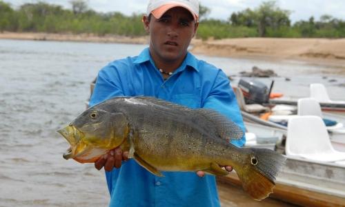 Imagem 37 de Peacock bass