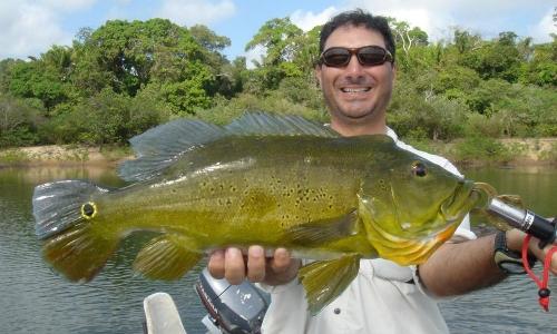 Imagem 64 de Peacock bass