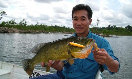 Imagem 39 de Peacock bass