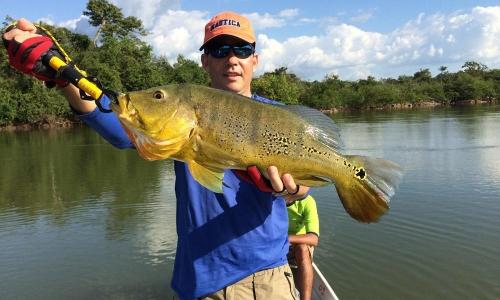 Imagem 15 de Peacock bass