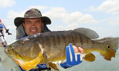 Imagem 48 de Peacock bass