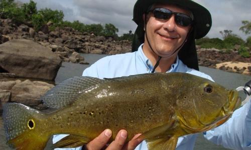 Imagem 70 de Peacock bass