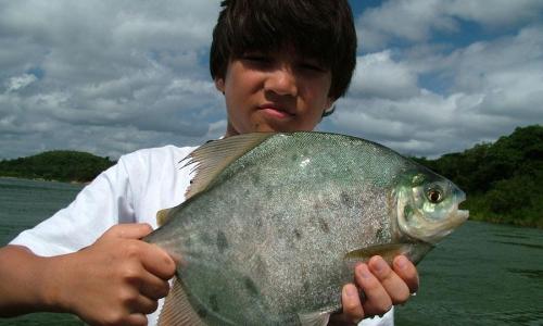Imagem 8 de Piranha