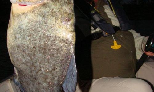 Imagem 9 de Piranha